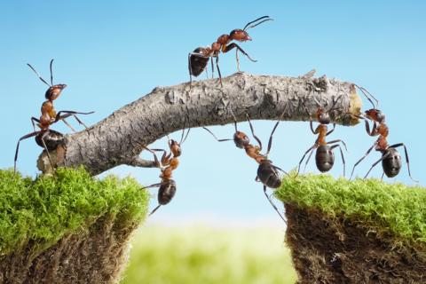 Ameisen Teamwork, Erfolgreiche B2B E-Commerce-Projekte