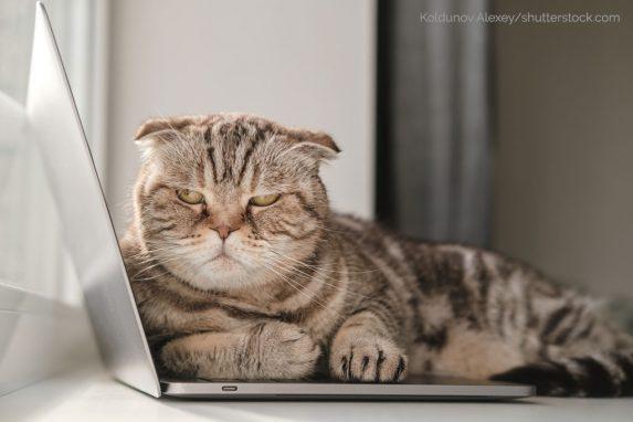 Grumpy Cat: Katze auf Notebook-Tastatur im Homeoffice im Coronavirus-Lockdown