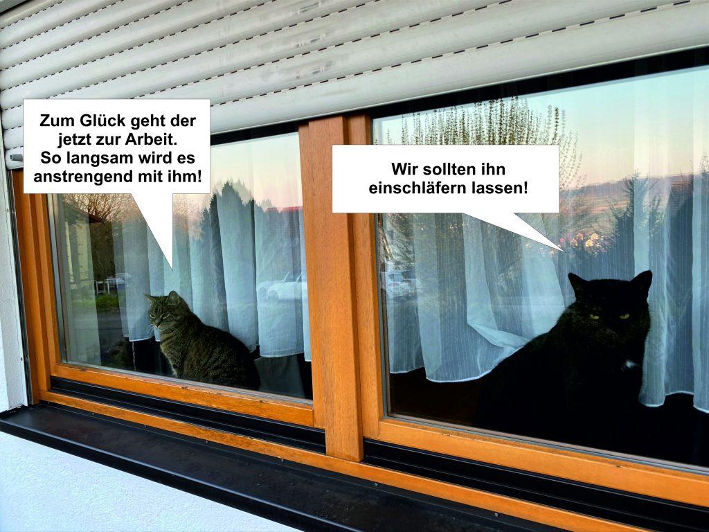 Starsky & Hutch Katzen im Homeoffoce