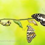Shopsystem-Wechsel B2B-Shop-Migration - Schmetterling entpuppt sich
